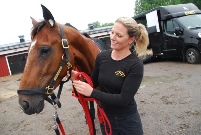 franska hästen i boden