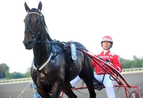 Det är en bra häst i grunden, säger Halmstadstränaren