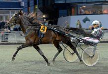 Nu har Bergsåkers-amatören fått fram en riktigt bra häst