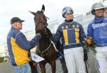 En segstark franskfödd häst