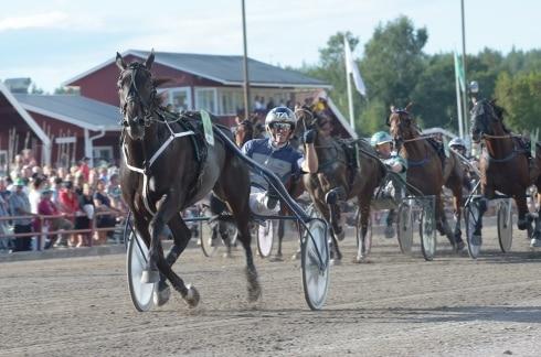 I fjol vann hästen nio av elva lopp