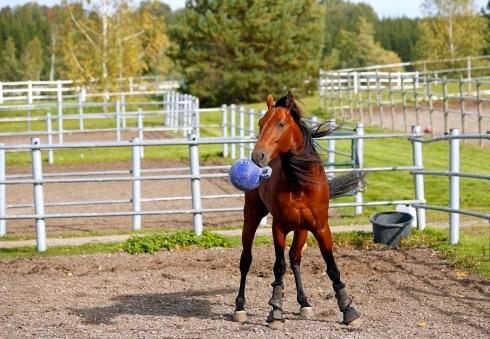 Readly Express har inte många dagar kvar som tävlingshäst