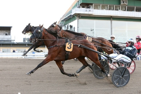 Sveriges näst vinstrikaste häst i år