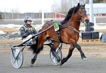 Tangen Haap blev den fjärde hästen