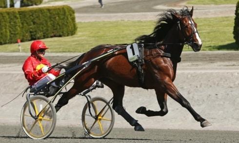 Disco Volante blir tolfte häst in