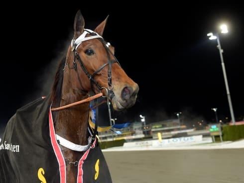 Erik Adielsson har valt häst i Elitloppet 2019