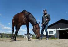 På söndag blir Daniel Redén den förste att starta fyra hästar i Elitloppet