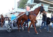 Carat Williams klar för stayerloppet på Åby