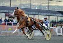 Conrad Lugauers Norton Commander är klar för start i Yonkers International Trot