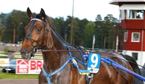 Frank Widerström inför V86-tävlingarna på Åby