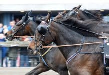 Inför V75: Spelutmaning med 15-hästarsfält
