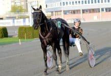 Inför V86: Kim Moberg åker med EN häst till Åby