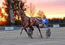 18 svensktränade hästar laddar för Europaderbyt