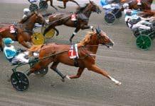 Inför V86®: Stark häst jagar första segern – över lång distans