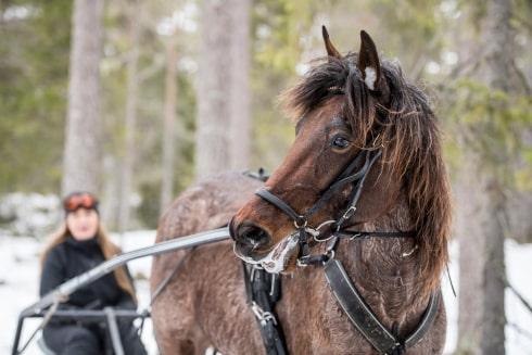 Kuskbyte på succé-knatten från Umeå
