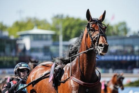 Inför V75®/dubbeljackpot: Spets och slut för Untersteiners elitloppshäst?