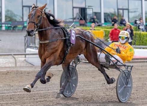 Inför V75®: Gocciadoros flygmaskin utmanar eliten i Åby Stora Pris