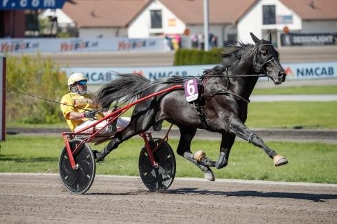 Inför V75: Gocciadoro jagar EM-titlar på Åby